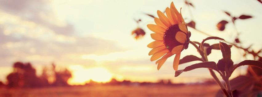 25 Beautiful Facebook Covers