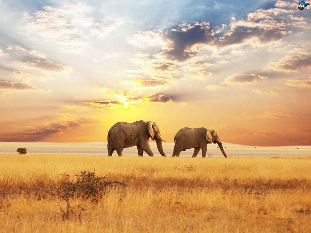 25 smart elephant pictures picshunger - Image elephant ...