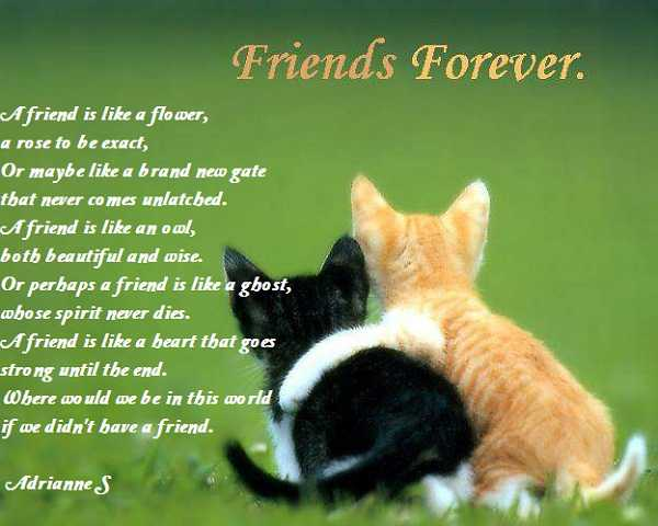 Quotes About Cats And Friendship 25 EverLasting ...