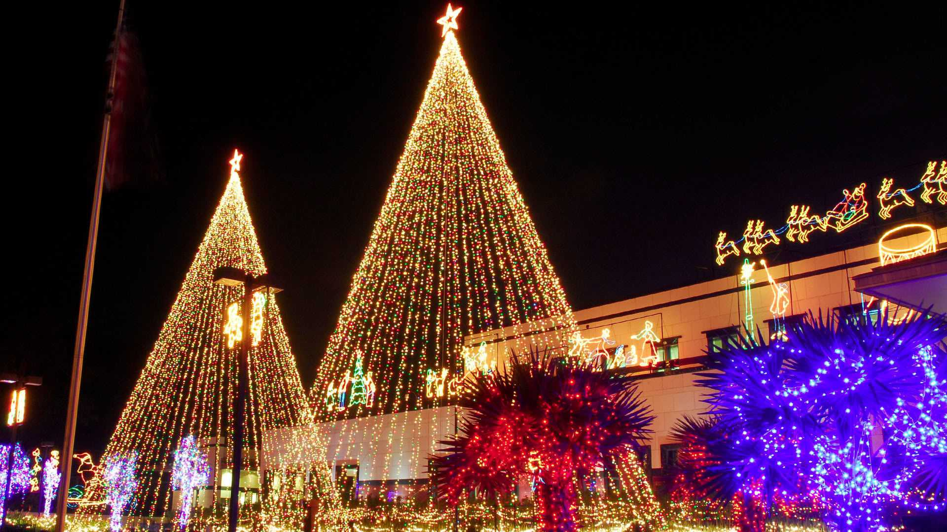 20 collection of christmas tree store picshunger