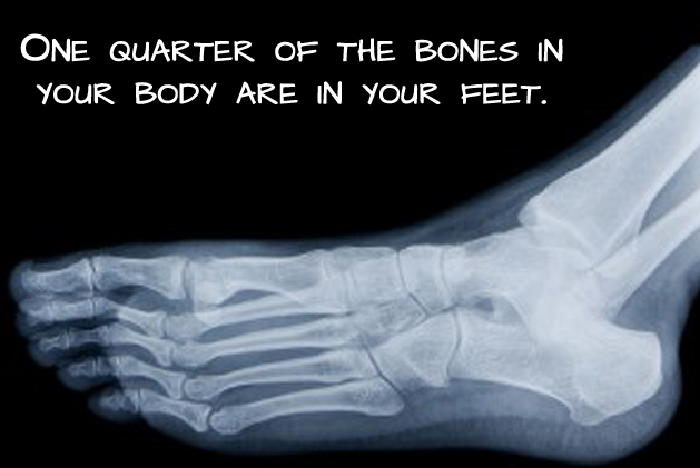 fact about human body